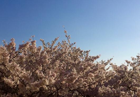 春、あれこれ・・